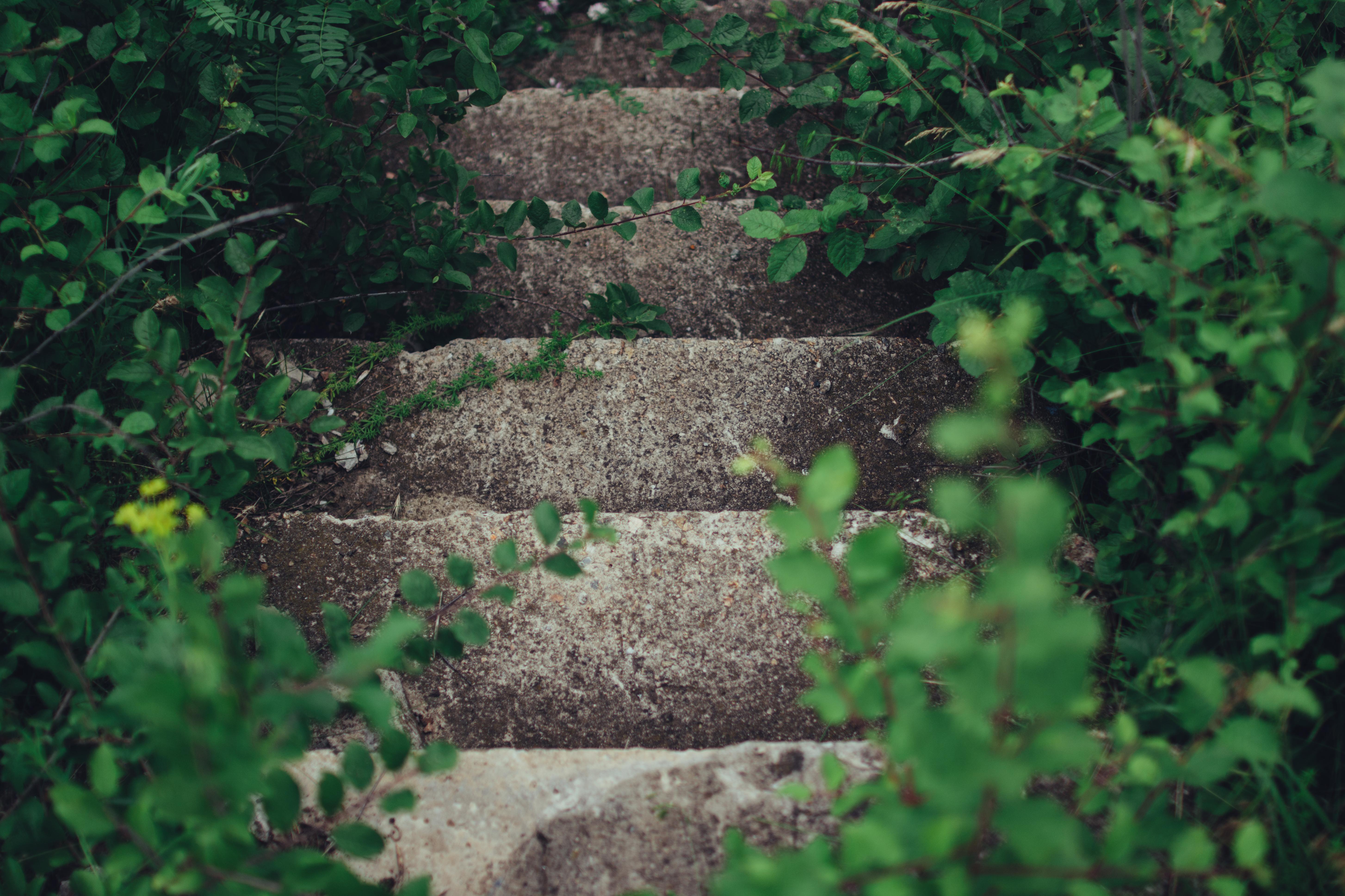 escada-pedra-junto-vegetac3a7c3a3o