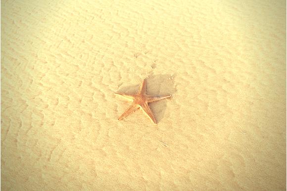 estrela-mar-580x387